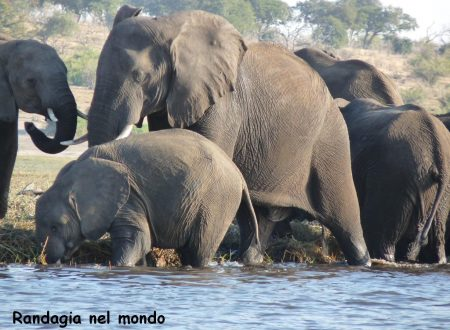 Kasane and the Chobe National Park